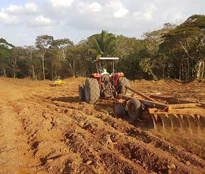 Pineaple farmland preparation