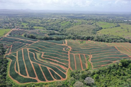Panama pineapple farm investment