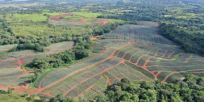 Purchase land on our pineapple farm