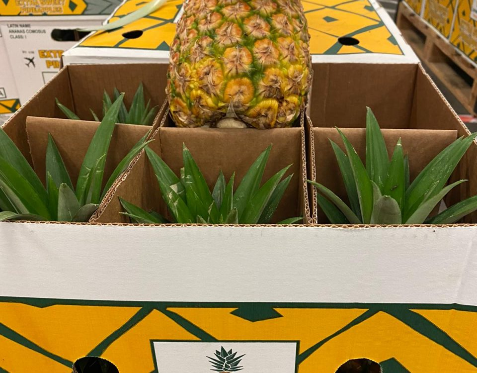 Colorada Fresh Pineapples air shipped to Italy